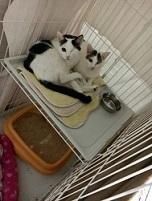 猫たち、幸せ賀状!_f0242002_14180881.jpg