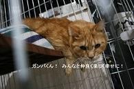 猫たち、幸せ賀状!_f0242002_14181282.jpg