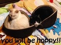 猫たち、幸せ賀状!_f0242002_14183311.jpg