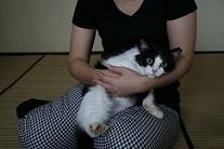 猫たち、幸せ賀状!_f0242002_14190495.jpg