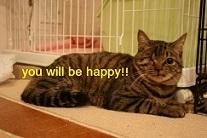 猫たち、幸せ賀状!_f0242002_15054854.jpg