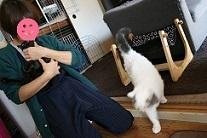 猫たち、幸せ賀状!_f0242002_15055889.jpg
