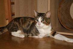 猫たち、幸せ賀状!_f0242002_19401654.jpg