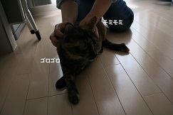 猫たち、幸せ賀状!_f0242002_19403223.jpg