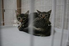 猫たち、幸せ賀状!_f0242002_19412643.jpg
