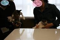 猫たち、幸せ賀状!_f0242002_19445933.jpg