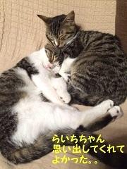 猫たち、幸せ賀状!_f0242002_19460742.jpg