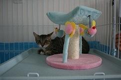 猫たち、幸せ賀状!_f0242002_19525055.jpg