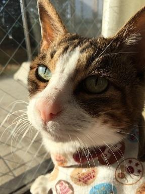 猫たち、幸せ賀状!_f0242002_23254760.jpg