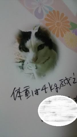 猫たち、幸せ賀状!_f0242002_23255623.jpg