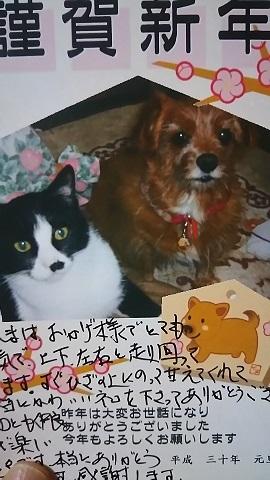 猫たち、幸せ賀状!_f0242002_23262656.jpg