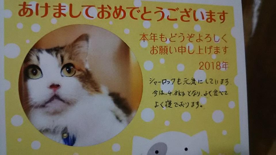 猫たち、幸せ賀状!_f0242002_23263454.jpg