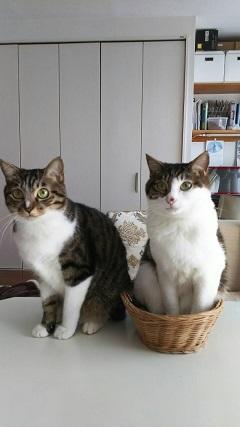 猫たち、幸せ賀状!_f0242002_23264835.jpg