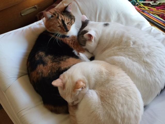 猫たち、幸せ賀状!_f0242002_23265657.jpeg