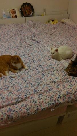 猫たち、幸せ賀状!_f0242002_23321623.jpg