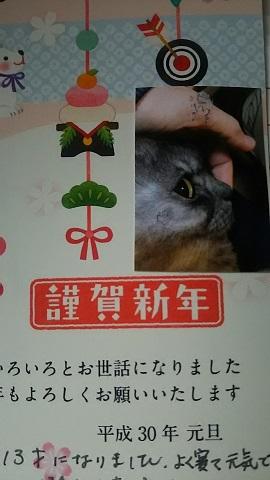 猫たち、幸せ賀状!_f0242002_23350636.jpg