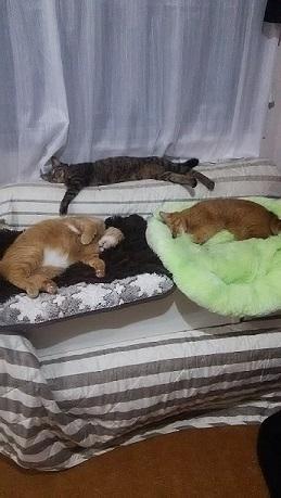 猫たち、幸せ賀状!_f0242002_23365599.jpg