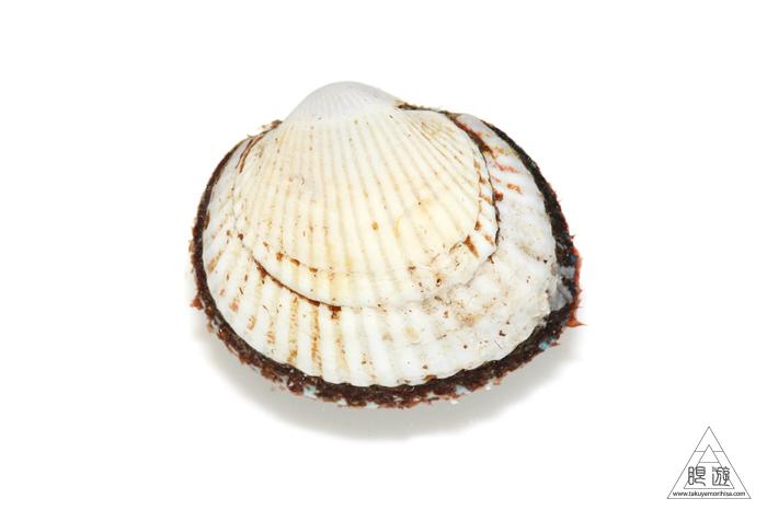 669 中海産 ~赤貝をいただく~_c0211532_23032264.jpg