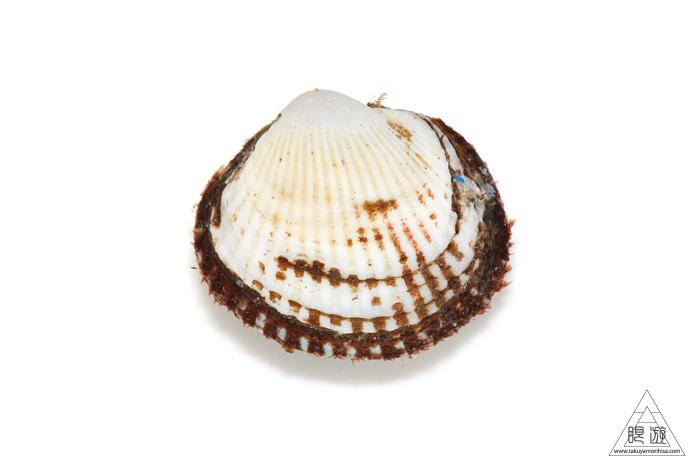 669 中海産 ~赤貝をいただく~_c0211532_23032326.jpg