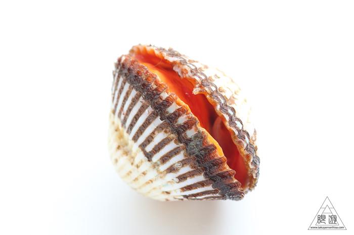 669 中海産 ~赤貝をいただく~_c0211532_23032376.jpg