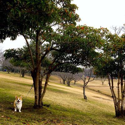 真冬の公園_f0035333_20571272.jpg