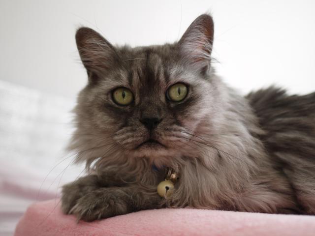 猫のお留守番 チョビくん編。_a0143140_23243010.jpg