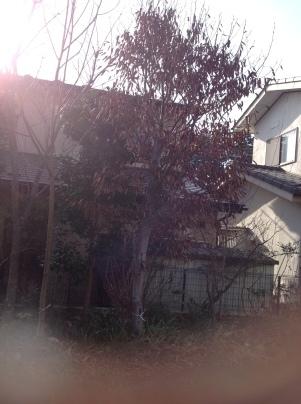 庭木伐採_c0186441_18364853.jpg
