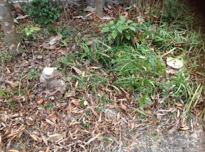 庭木伐採_c0186441_18393849.jpg