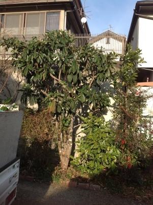 庭木伐採_c0186441_18410874.jpg