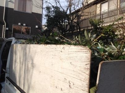 庭木伐採_c0186441_18440164.jpg