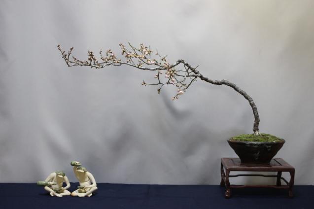 梅の開花 - 雨宮園 ☆~盆栽・山野草・陶芸~☆趣味が仕事でも・・・。