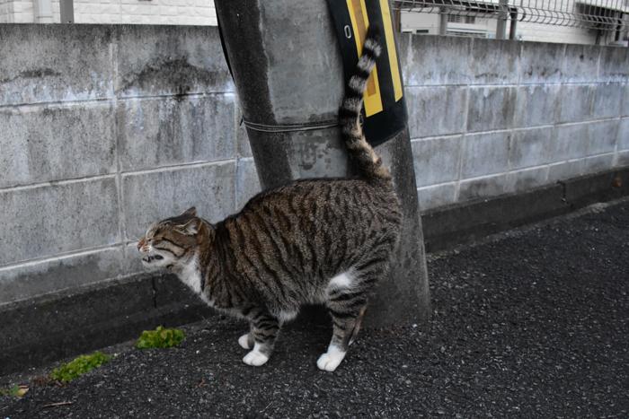 だって猫も鳥も好きだもん (^o^)_c0049299_20521069.jpg
