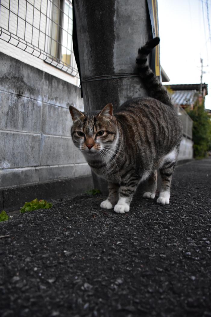 だって猫も鳥も好きだもん (^o^)_c0049299_20530841.jpg