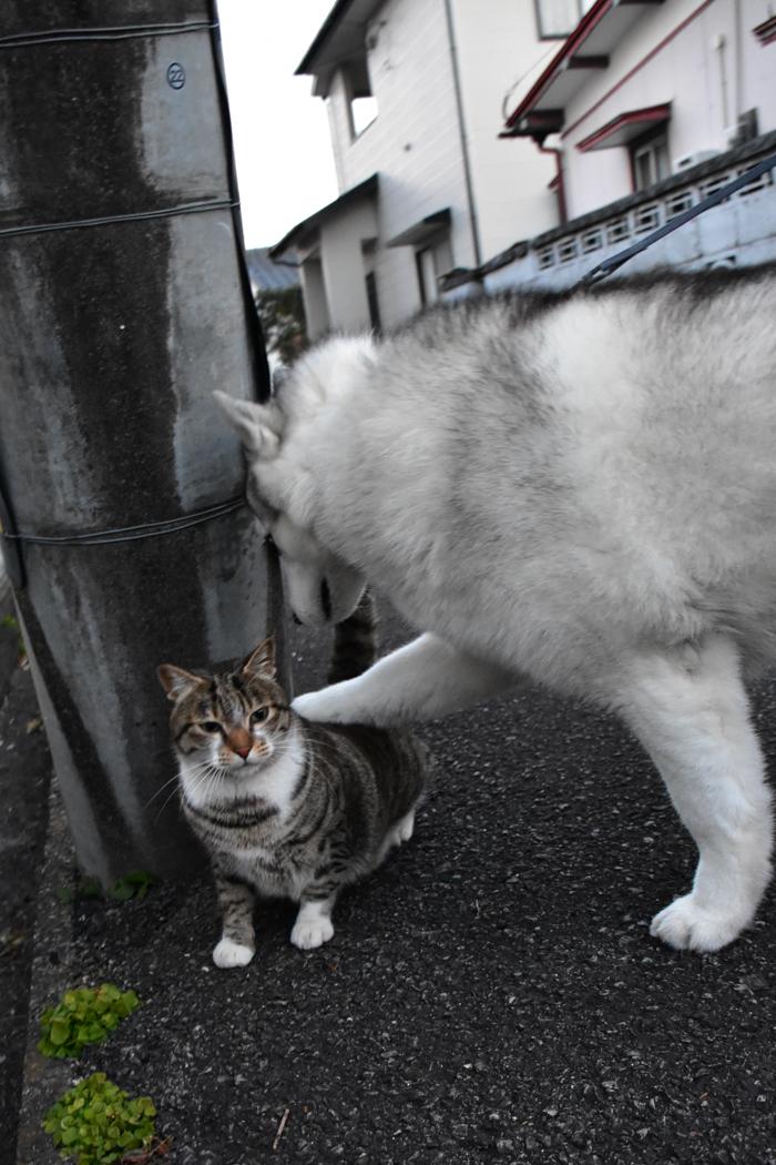 だって猫も鳥も好きだもん (^o^)_c0049299_20582714.jpg