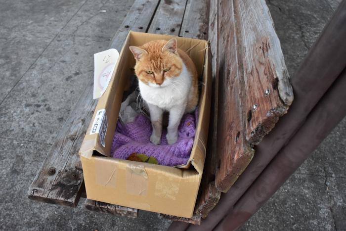 だって猫も鳥も好きだもん (^o^)_c0049299_21005948.jpg