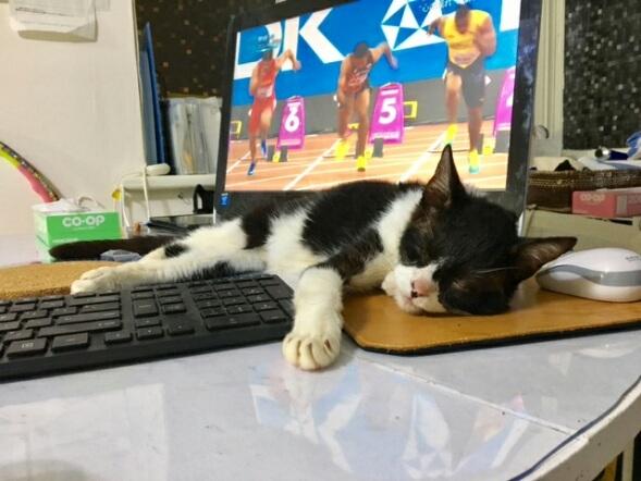 猫たち、幸せ賀状!_f0242002_10103152.jpg