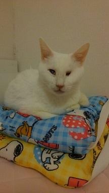 猫たち、幸せ賀状!_f0242002_18550827.jpg
