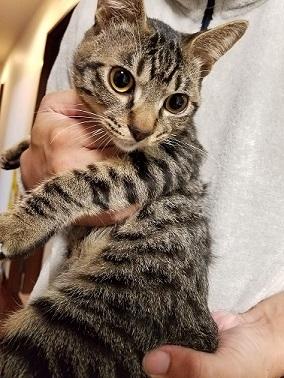 猫たち、幸せ賀状!_f0242002_19011818.jpg