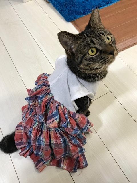 猫たち、幸せ賀状!_f0242002_19051134.jpg