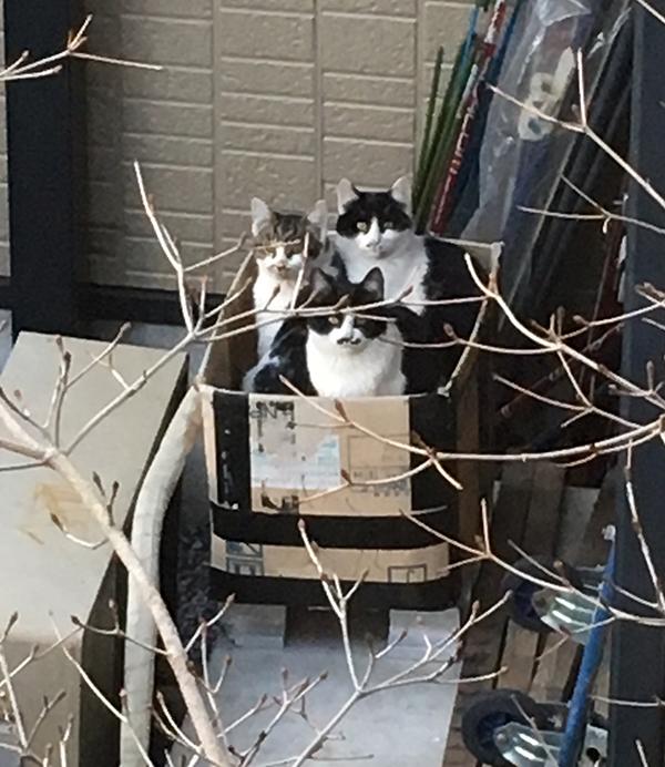 猫デッキに上がってくる野良猫たち_b0038919_14293292.jpg