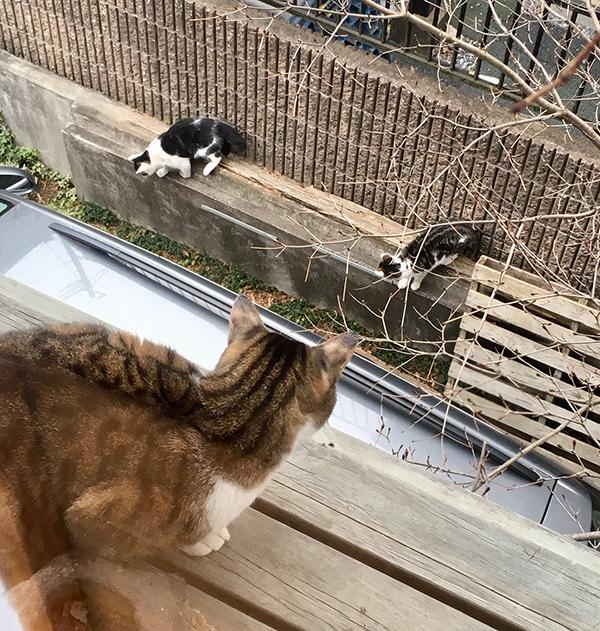 猫デッキに上がってくる野良猫たち_b0038919_14301625.jpg