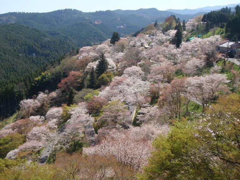 春のプラン、インターネット販売開始いたしました!_e0154524_03070099.jpg