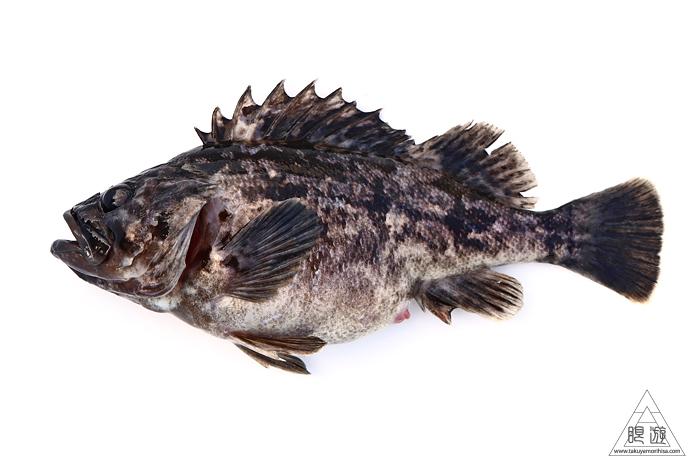 682 中海産 ~中海で最も美味しい魚「クロソイ」~_c0211532_20350337.jpg