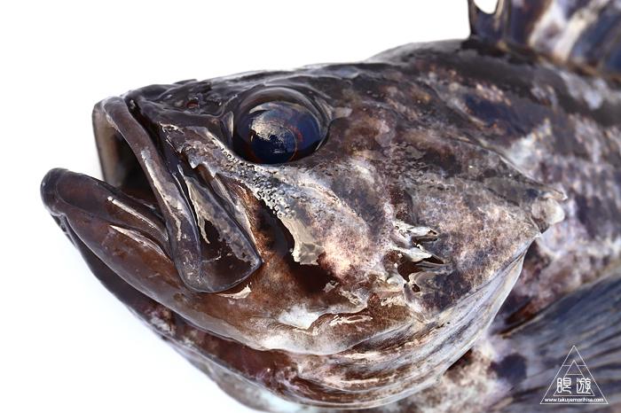 682 中海産 ~中海で最も美味しい魚「クロソイ」~_c0211532_20350378.jpg
