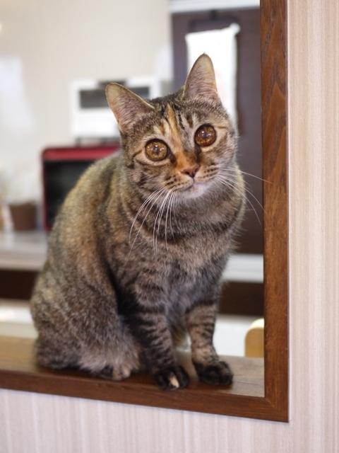 猫のお留守番 ワサビちゃん天ちゃん麦くん茶くん編。_a0143140_21480550.jpg