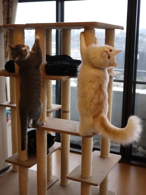 猫のお留守番 ワサビちゃん天ちゃん麦くん茶くん編。_a0143140_21485981.jpg