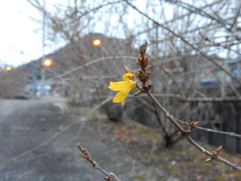 寒中に春の兆し_e0175370_21320139.jpg