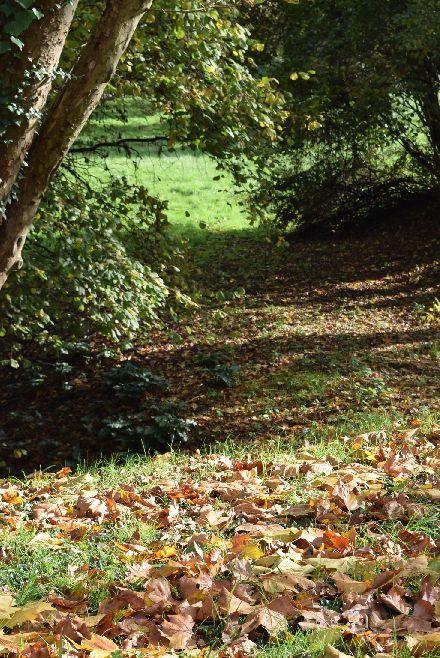 Jouy-en-Josasの森の中に迷い込んだ様な・・・_b0346275_07214893.jpg