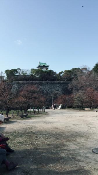 今日は暖かいので大阪城梅林まで_f0118400_15322229.jpg