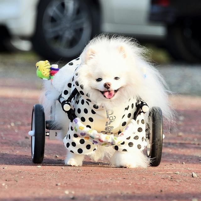 車椅子日和_d0360206_23542506.jpg